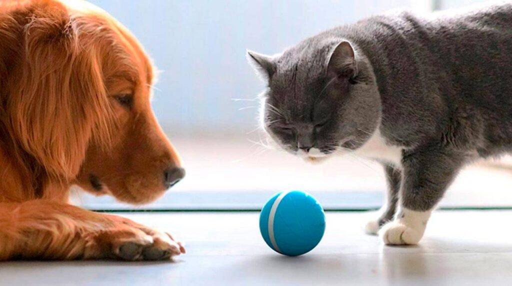 Peppy Pet Ball